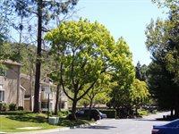 760 Canyon Oaks Dr. #A, Oakland, CA 94605