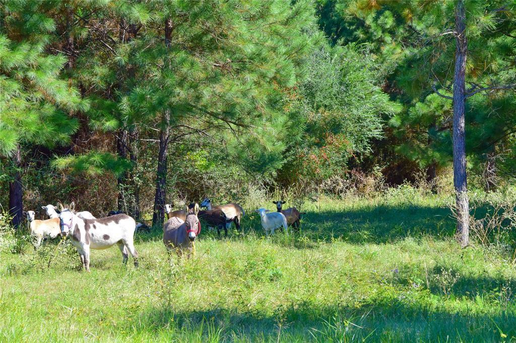 15122 Thistledown Road, Cypress, TX 77429