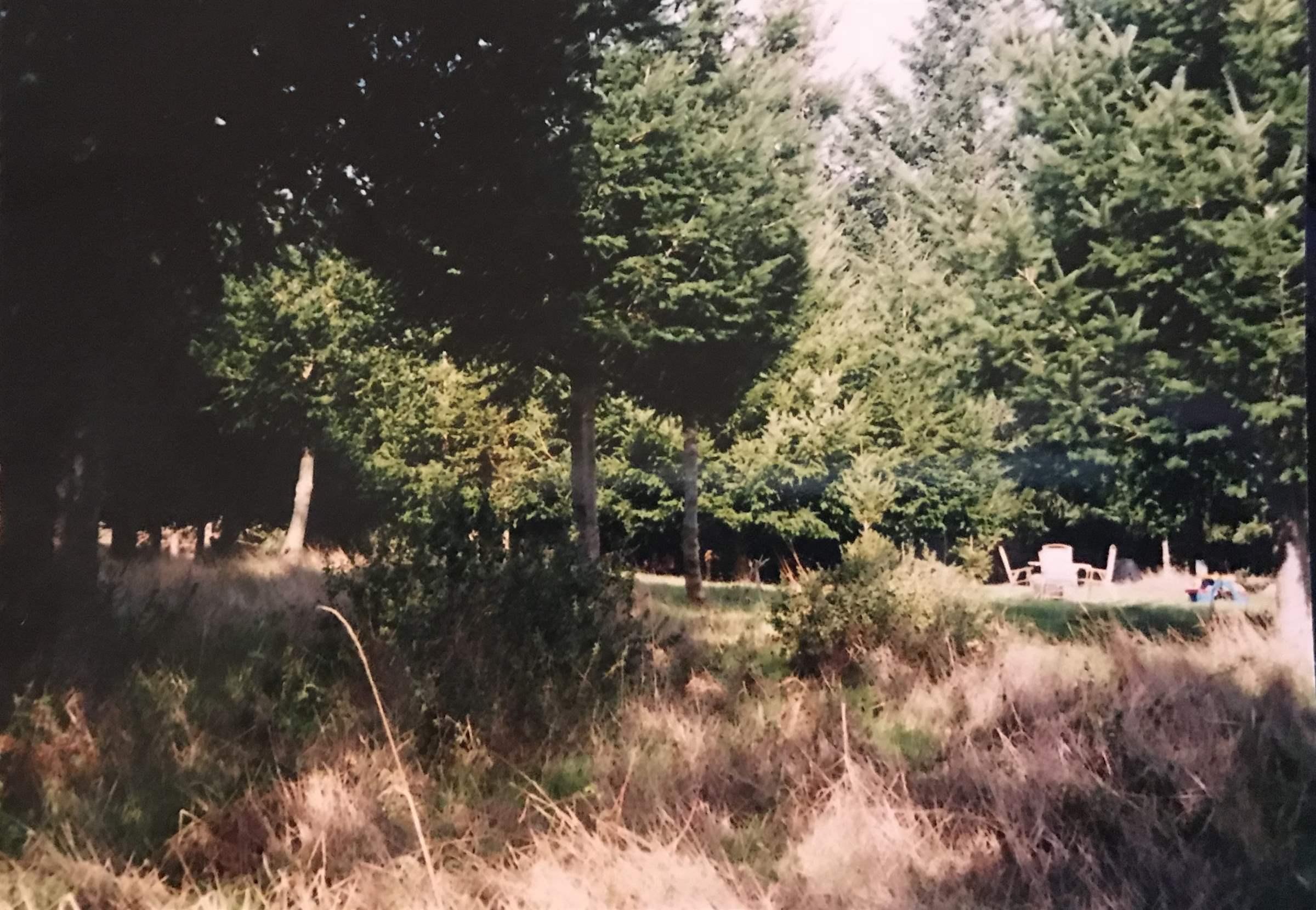 221 Debbie Ln, Whitethorn, CA 95589