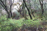 12537 Widgeon Way, Clearlake Oaks, CA 95423