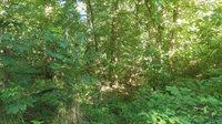 XX Dogwood Trails Loop, #3, Carl Junction, MO 64834