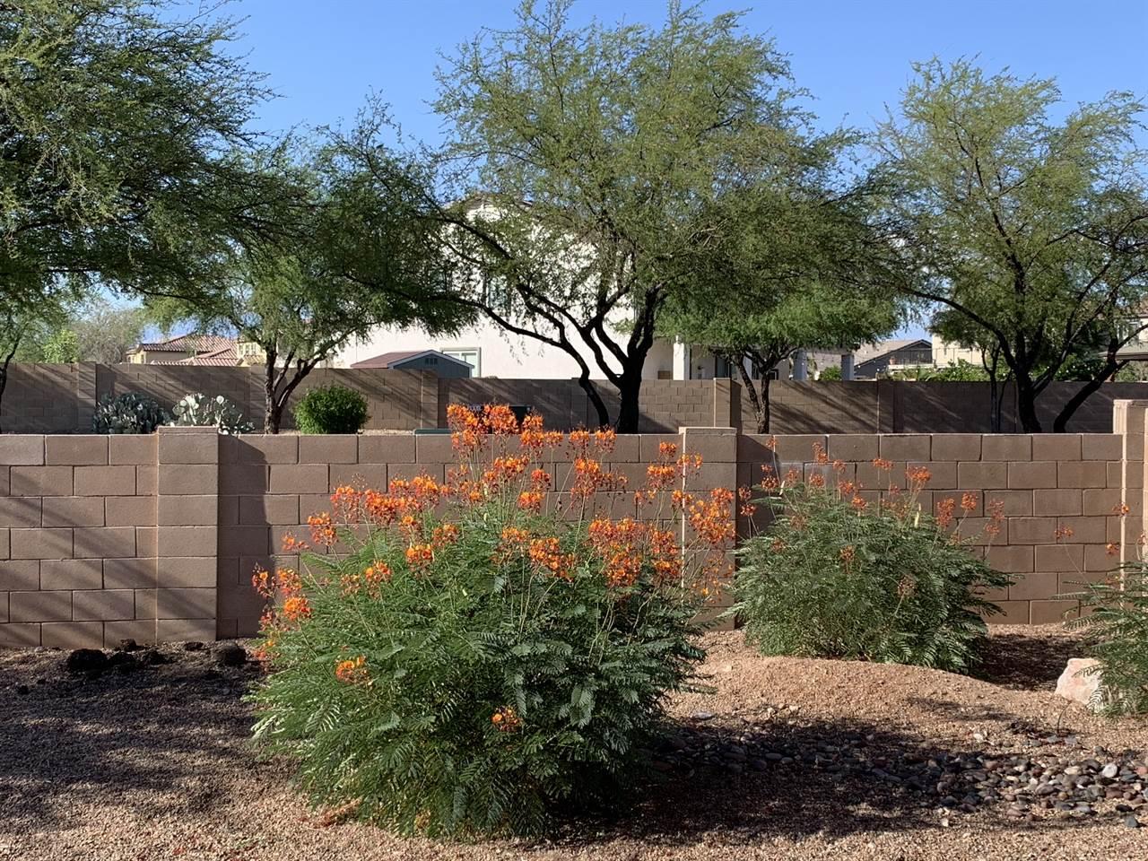 4907 E Chickweed, Tucson, AZ 85756