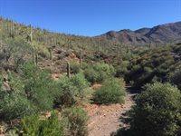 42402 N Fleming Springs Rd, Cave Creek, AZ 85331