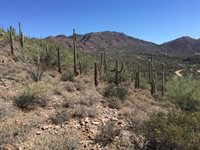 4240x N FLEMING SPRINGS RD, Cave Creek, AZ 85331