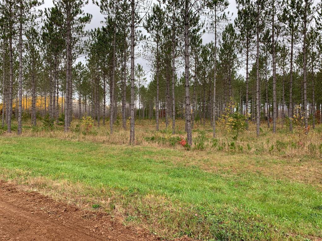 xxx Cathedral Pines Dr Tract B, Sturgeon Lake, MN 55783