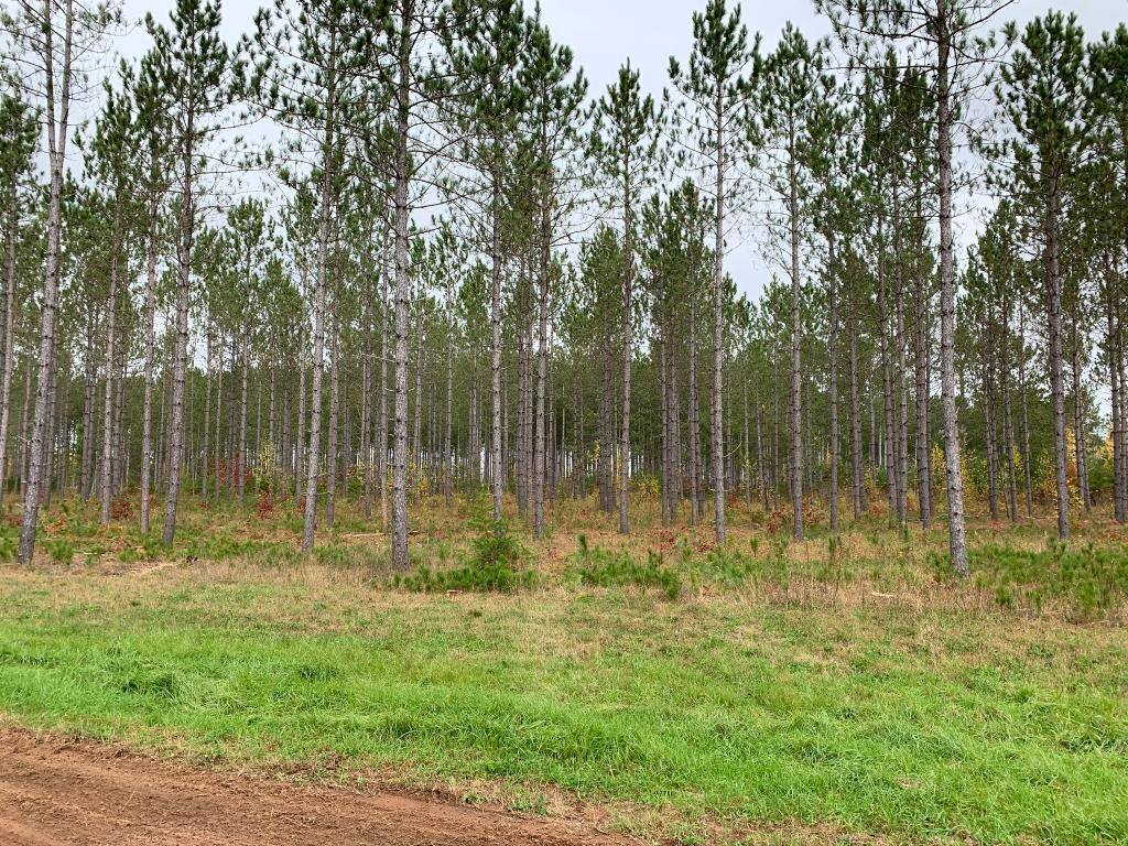 xxx Cathedral Pines Dr Tract C, Sturgeon Lake, MN 55783