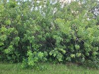 123 SW Ridgecrest Drive, Port Saint Lucie, FL 34953