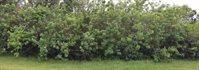 204 SW Ridgecrest Drive, Port Saint Lucie, FL 34953