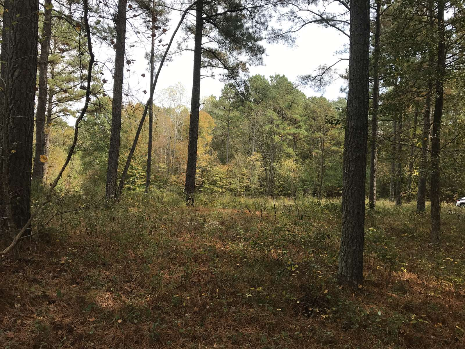 Lot 9 Rachel Court, Bracey, VA 23919