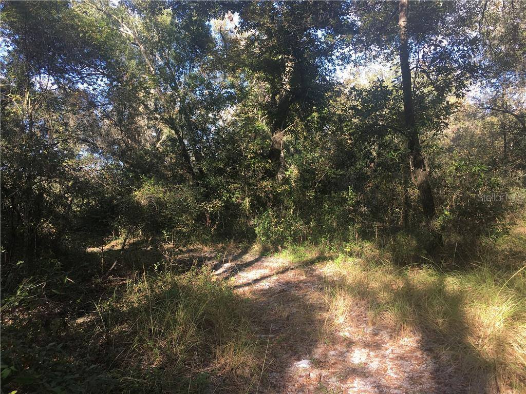 0 Unnamed Road, Webster, FL 33597
