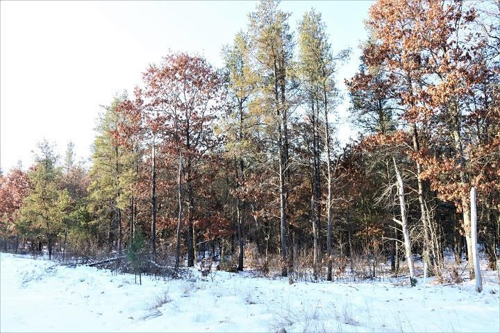 80 Acres 10TH AVENUE, Nekoosa, WI 54457