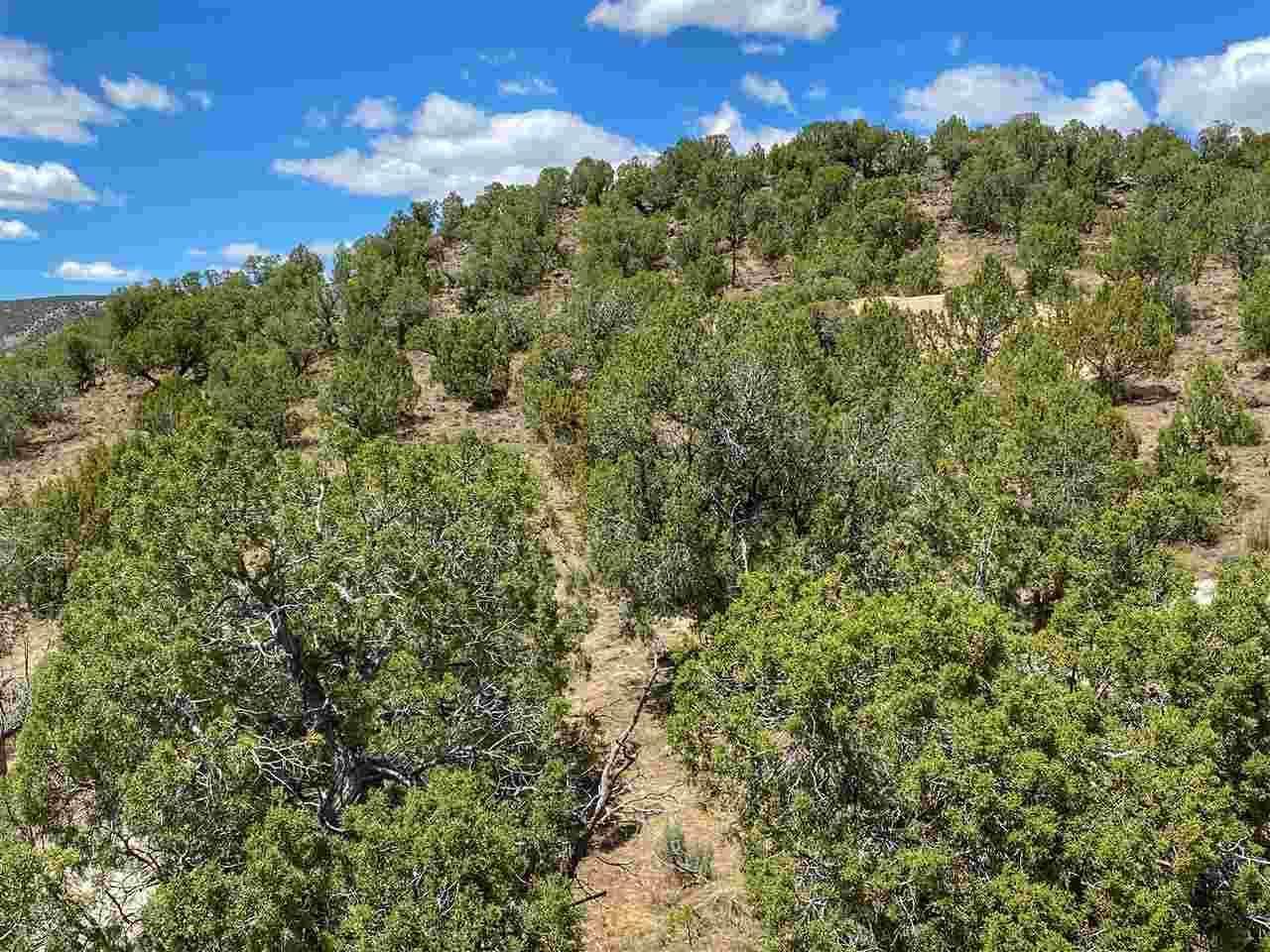 11288 48 1/4 Road, Mesa, CO 81643