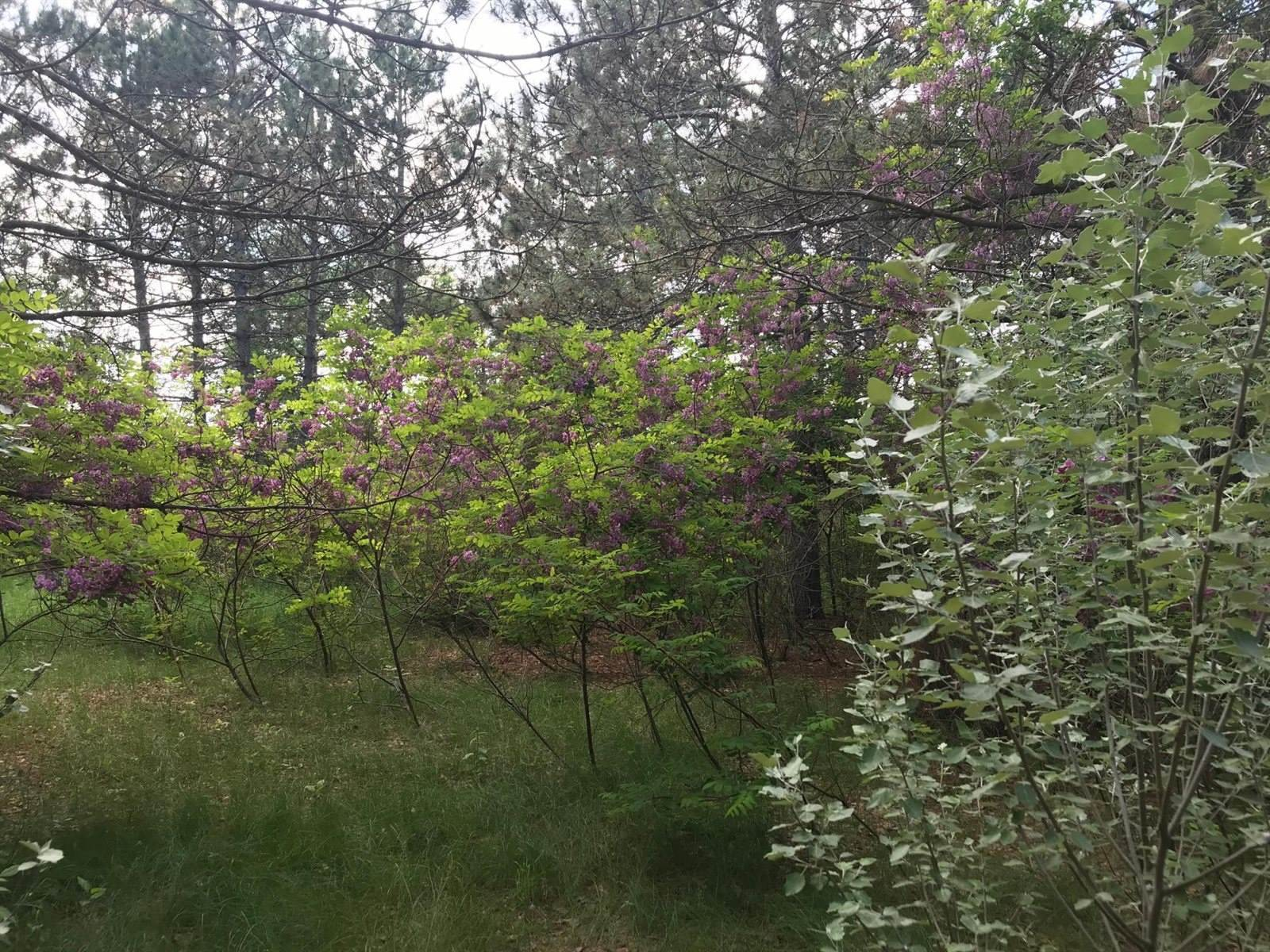 38497 Riverview Road, Pillager, MN 56473