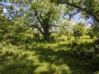A0022 J Grimes, Tract 45-5, 66.322 acre, Navasota, TX 77868