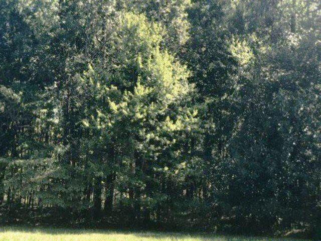 Michie Pebble Hill, Stantonville, TN 38379