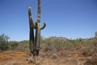 652X East Ashler Hills Approx. Road, Apn #216-50-138a, Unincorporated County, AZ 85331