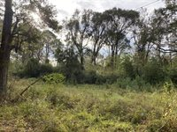 Tbd Pine Tree Road, Opelousas, LA 70570