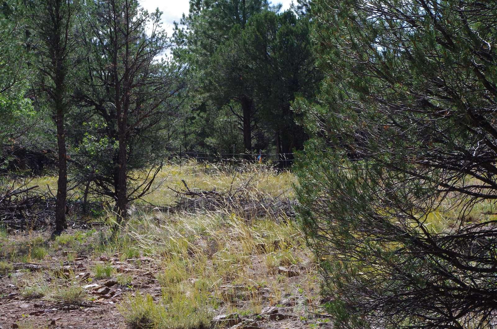 102 Big Canyon Point, Ridgway, CO 81432