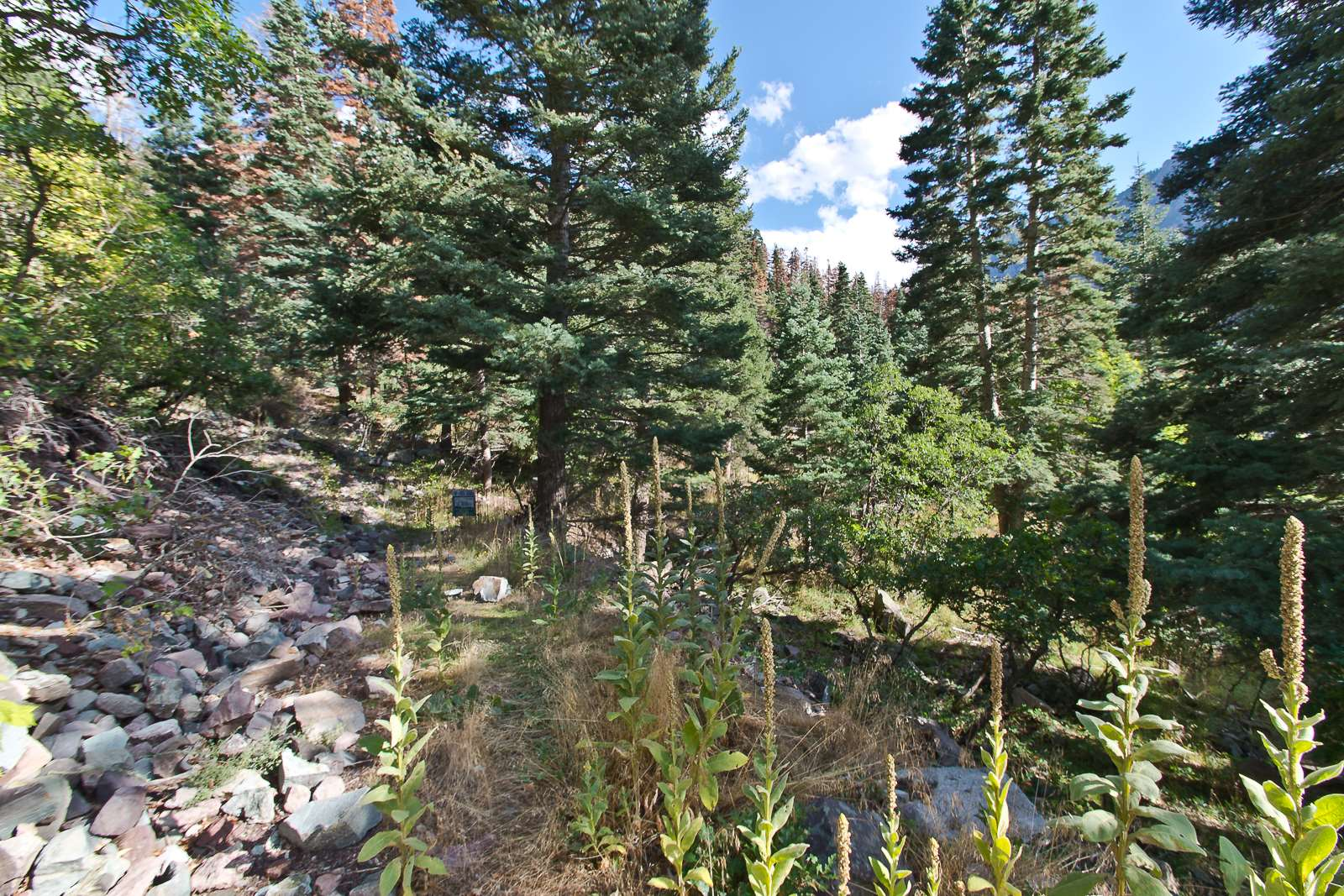 Lot B 6th Street, Ouray, CO 81427
