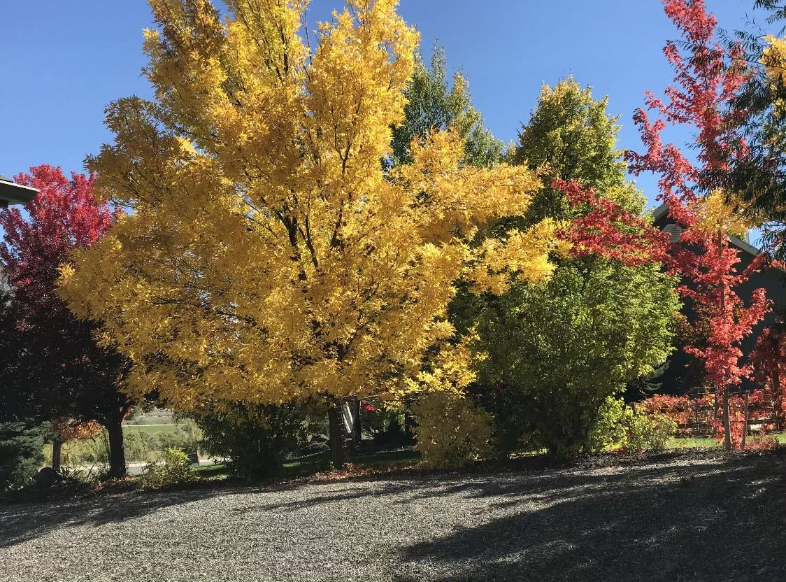 4033 Waterfall Drive, Montrose, CO 81403