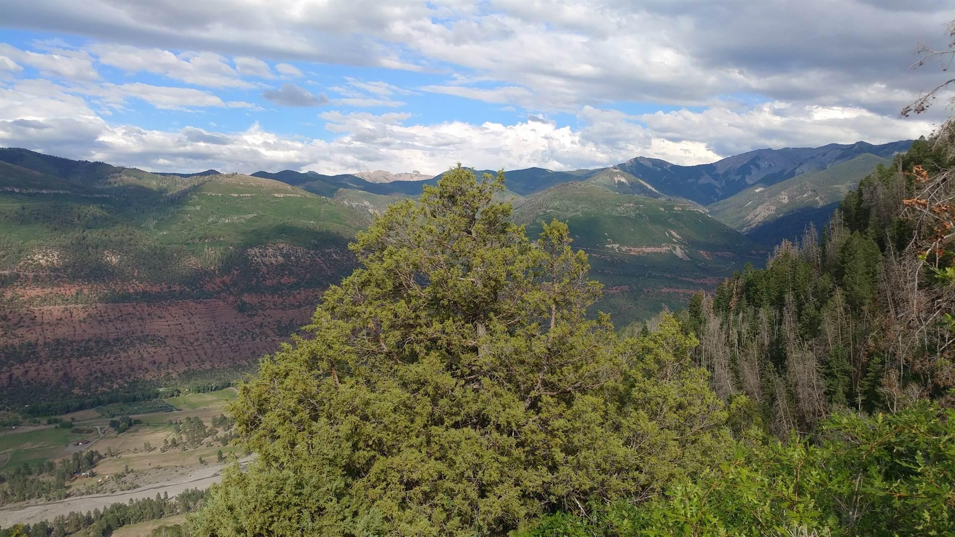 1540 Elk Ridge Trail, Ridgway, CO 81432