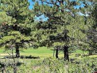 TBD (Lot 539) N Badger Trail, Ridgway, CO 81432