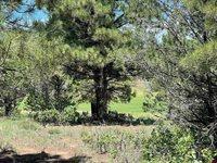 695 N Badger Trail, Ridgway, CO 81432